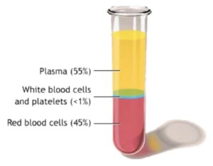 Blood Plasma Prp